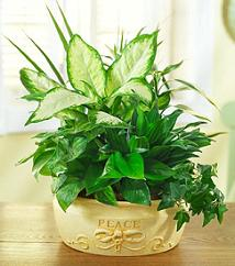 peaceful-indoor-house-plant