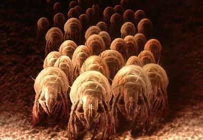getting-rid-of-dust-mites