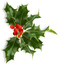 holly-christmas-foliage